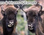 Parc des bisons d'Europe