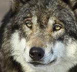 Parc des loups